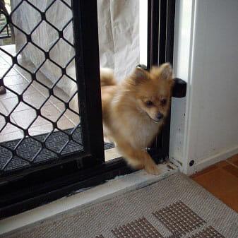 Autoslide Automatic Door Opener For Pets